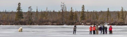 On the ice with polar bears. Great Ice Bear Adventure. Dymond Lake Ecolodge. Robert Postma photo.