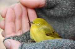 Feathered friend at Seal River Heritage Lodge. Dirk Van-Dosselaer photo.