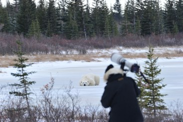 polar-bear-safari-churchill-wild-nanuk-polar-bear-lodge-ian-johnson
