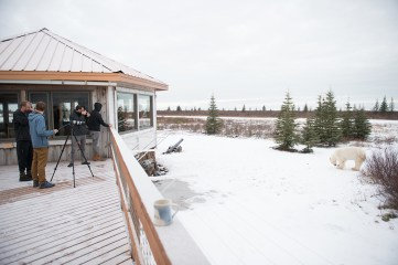 polar-bear-safari-churchill-wild-nanuk-polar-bear-lodge