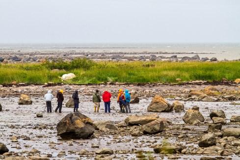 Guest viewing polar bear at ground level. Seal River Heritage Lodge. Didrik Johnck photo.