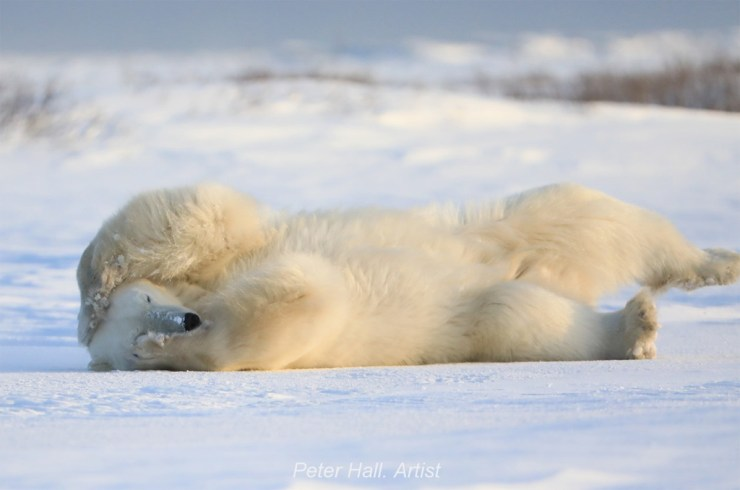 Rolled around on the ice for awhile...