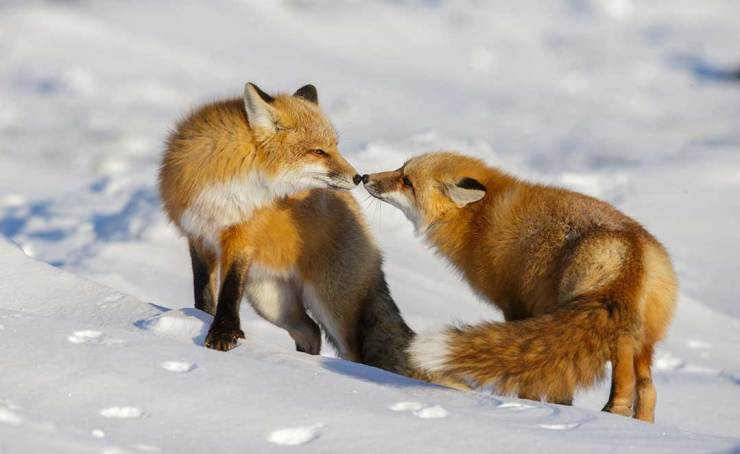 Love on a cold day. Seal River Heritage Lodge. Charles Glatzer photo.