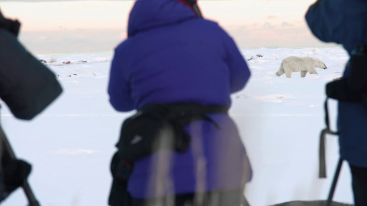 Guests of Seal River Heritage Lodge observing a polar bear at ground level