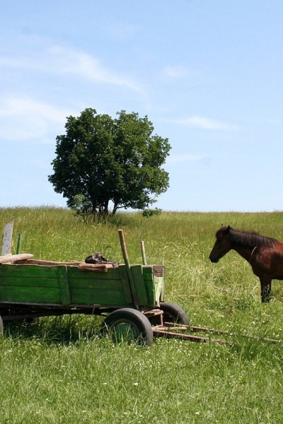Cart Before The Horse Church Planting