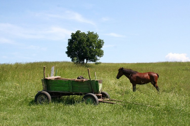 The Cart Before The Horse?