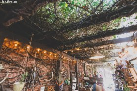 Cool ivy ceiling