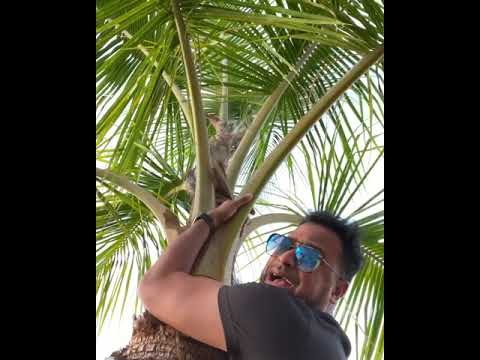 Ravi B Caught On A Coconut Tree