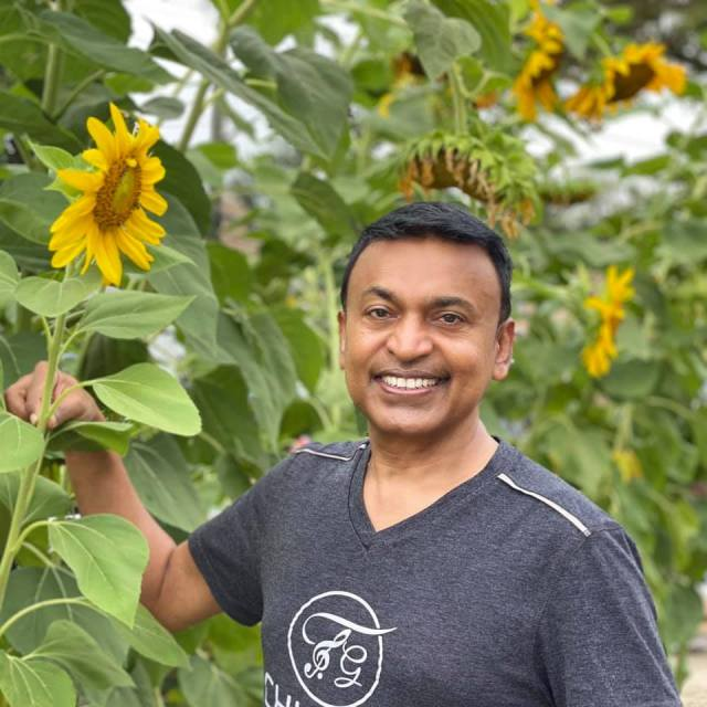 Terry Gajraj Sunflower