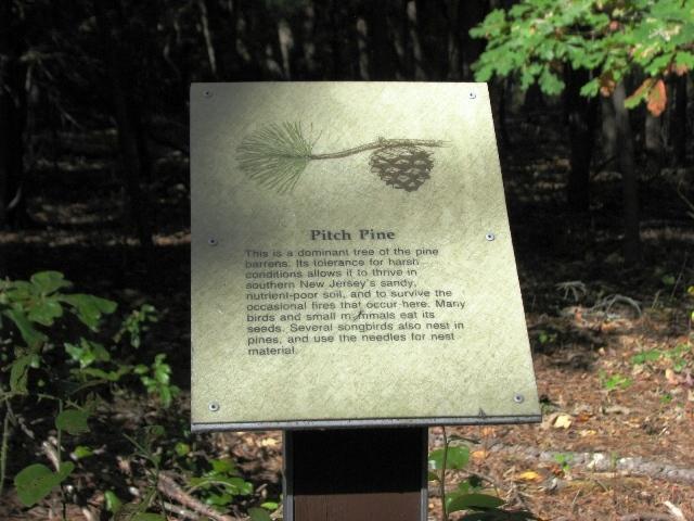 bảng pitch pine