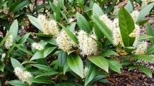 Một loại hoa trắng nhụy vàng không biết tên.
