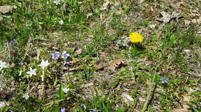 hoa dại nở ở sân sau