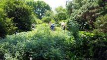 người đi xem vườn giữa các loài hoa