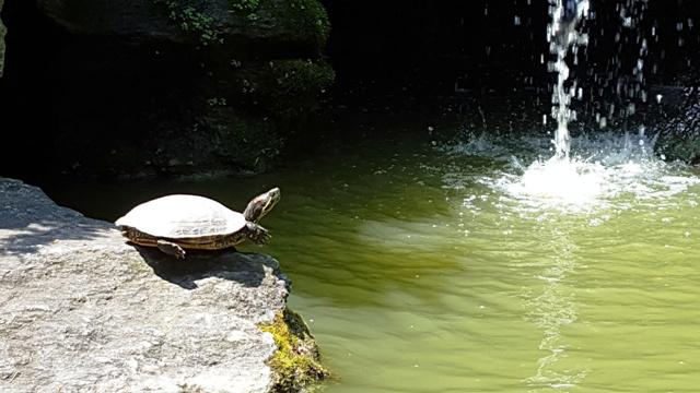 rùa ngắm thác nước