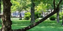 tầm nhìn từ chỗ ngồi dưới bóng cây