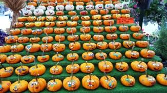 Hình như chúng tôi đến vào ngày lễ Halloween của Canada nên có những quả bí nhỏ được sơn màu rất xinh.