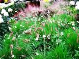 cỏ hồng chụp xa
