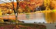 Bầy ngỗng sống trên hồ Watchung