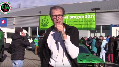 Photo of Wie legal ist Cannabis in Tschechien? Cannafest Prag 2017