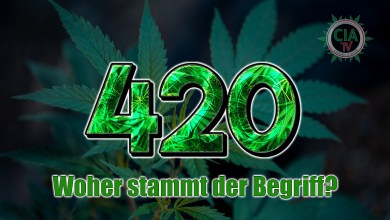 "Photo of 420 – Der ""Weltkiffertag"""