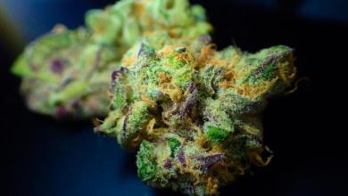 Photo of Cannabis Fortschritte in Thailand und Brasilien