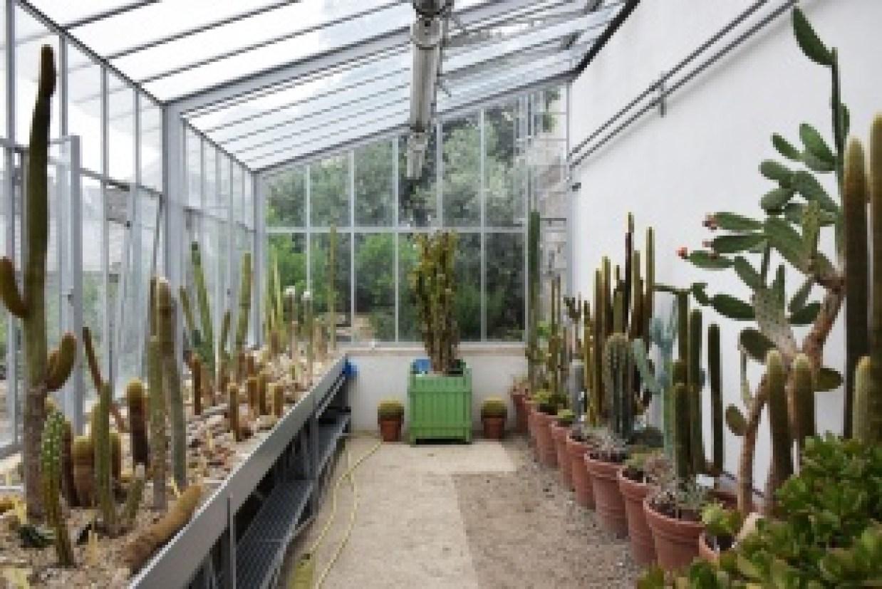 Au paradis des cactus