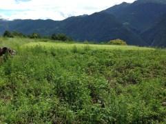 Raetia Biodiversità Alpine - Campo Grande Patate da Semina Lo Sfondo di Montagne