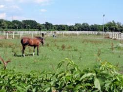 cascina lattuada cavallo