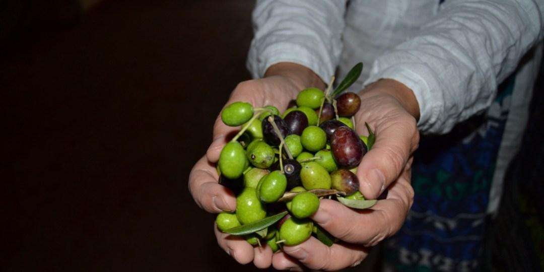 Olive in Mano