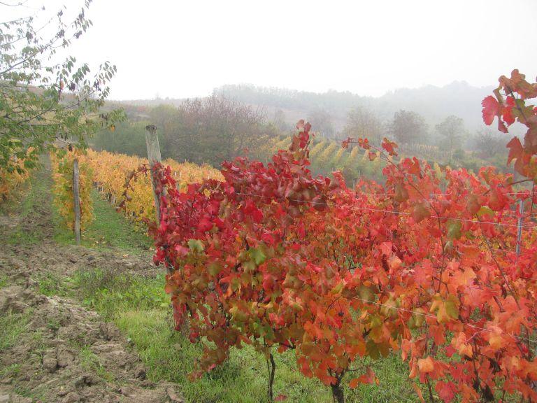 Nibiò e dolcetto in autunno