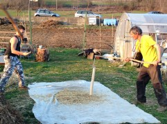 La Battitura dell'Orzo