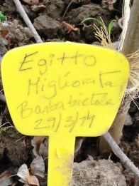 Cascina Sora - Orto Egitto Barbabietola