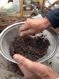 Raetia - Perilla Fruttescens Lavorazione