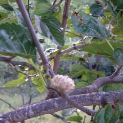 Agriturismo I Moresani - Bacca di Gelso