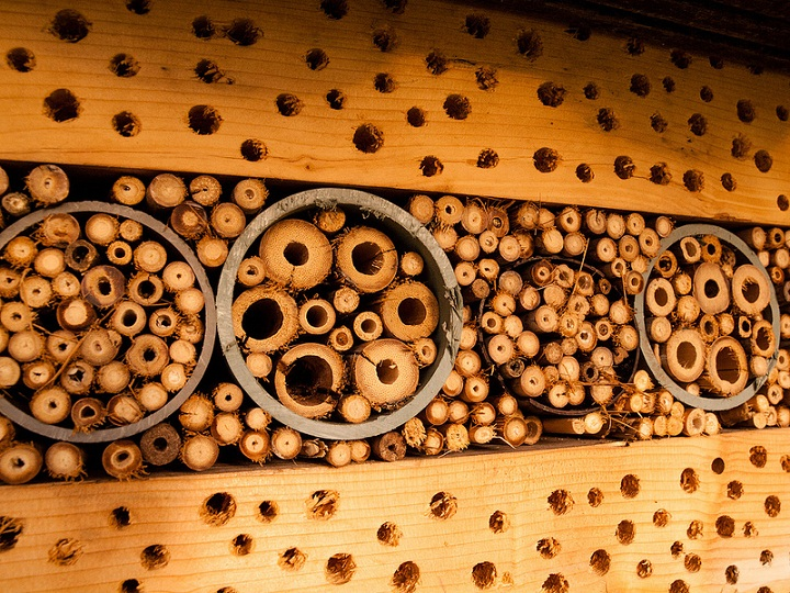 26 insect hotel