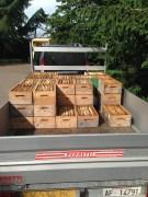 Raccolta Miele - Si Caricano I Melari Sul Camion e Si Portano in Laboratorio per la Smielatura