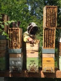 Raccolta Miele - Vengono tolti i Melari Dagli Alveari