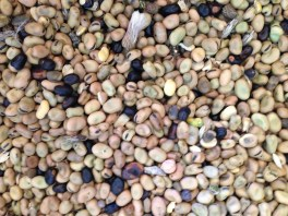 Consorzio Formicoso Alta Irpinia - Fattoria di Peppino Pelullo Il Favino