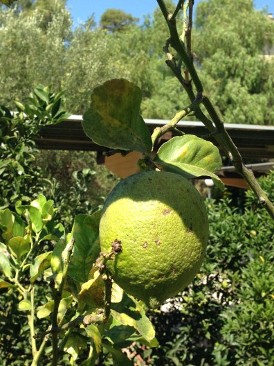 Fondazione Alario - Limone Verde