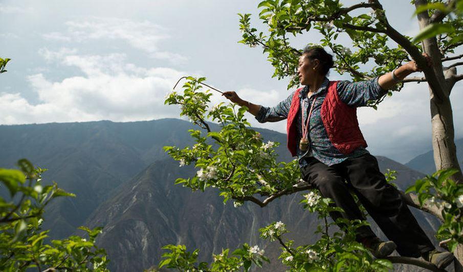 Gille Sabrè Impollinatori in Sichuan