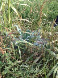 Agricola Cassani - Vegetazione Incontrollata