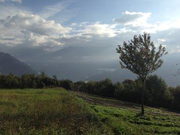 Elisabetta Maccioni - Zafferano Campo