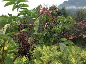 Non Solo Piccoli Frutti - Le Coltivazioni 4