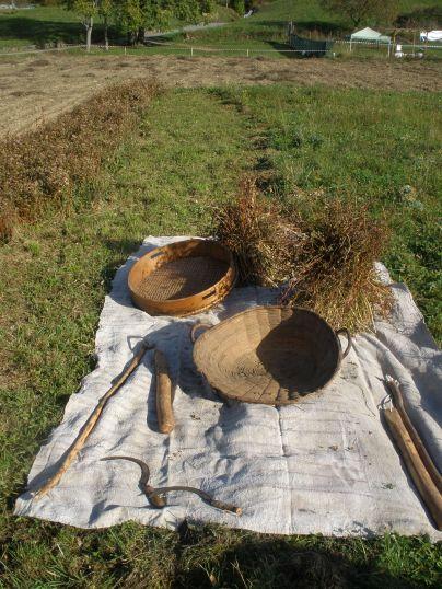 Erbadigh Grano Saraceno - Utensili per la Battitura