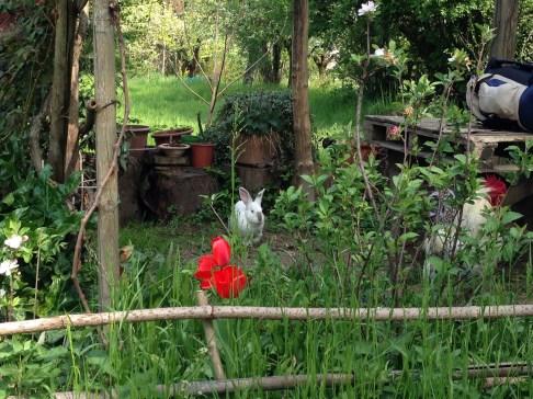Italia Che Cambia - Tavolo Agricoltura 9