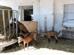 cascina lattuada capre