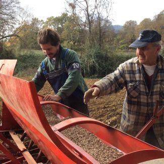 Monococco in Umbria - I Semi nella Seminatrice