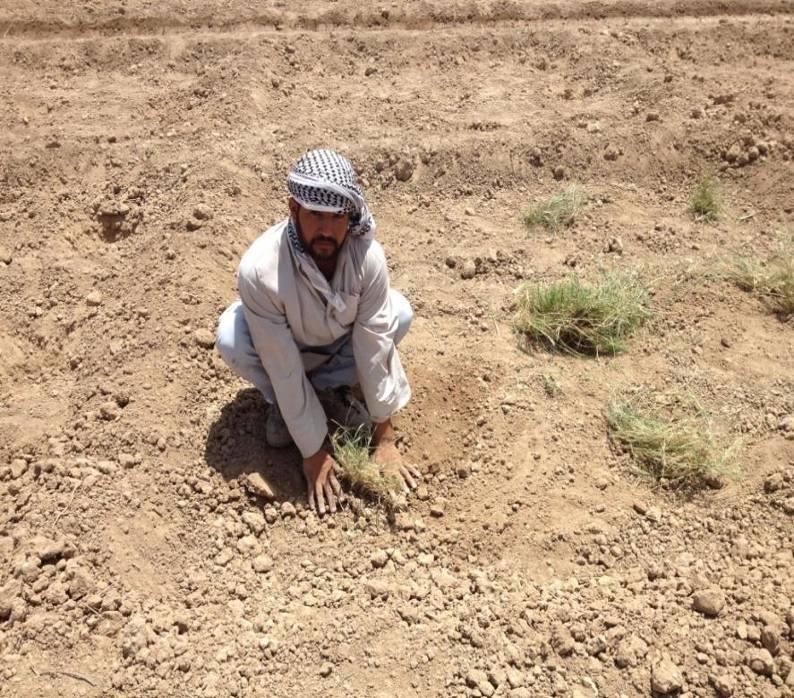 Salvasemi siriani ICARDA contadino