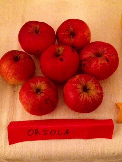 Agricola Solan - Mela Orsola