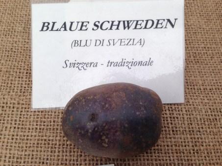 Mandillo dei Semi 2015 - Patata Blu di Svezia